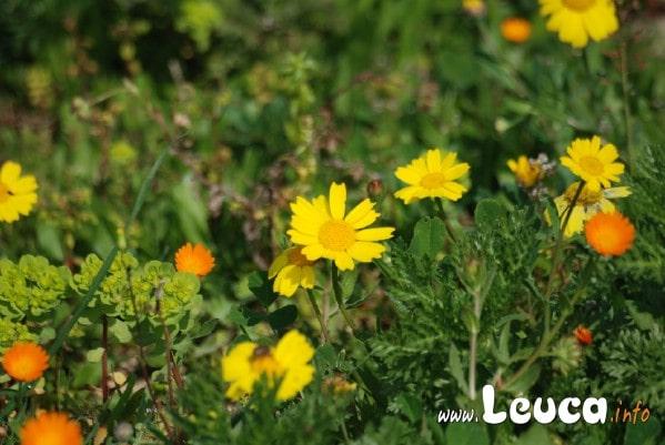 Fiori e vegetazione Salentina in primavera