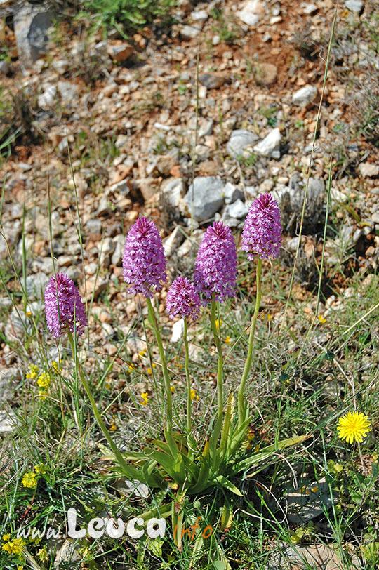 Biodiversità paesaggio Costa Otranto Santa Maria di Leuca